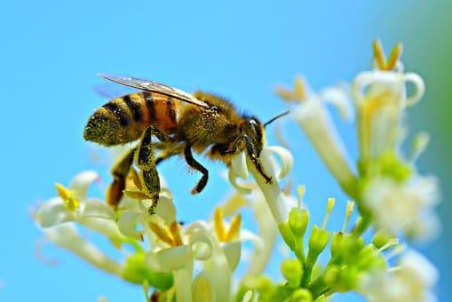 EXCO VALLIANCE prend des abeilles sous son aile!